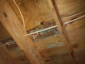 Water Damage & Mold Removal in Atlanta, GA (2)