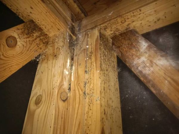 Mold Remediation in Atlanta, GA (1)